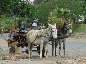 Olifantshoek Donkey Cart Sunset Ride